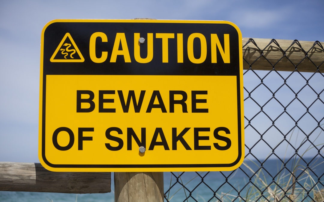 Travel Tips : Snake Safety