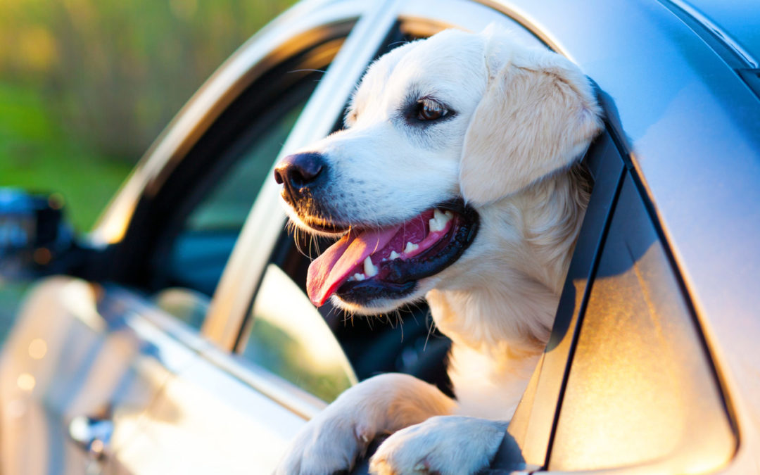 12 TIPS FOR TRAVELLING WITH YOUR PET – #2