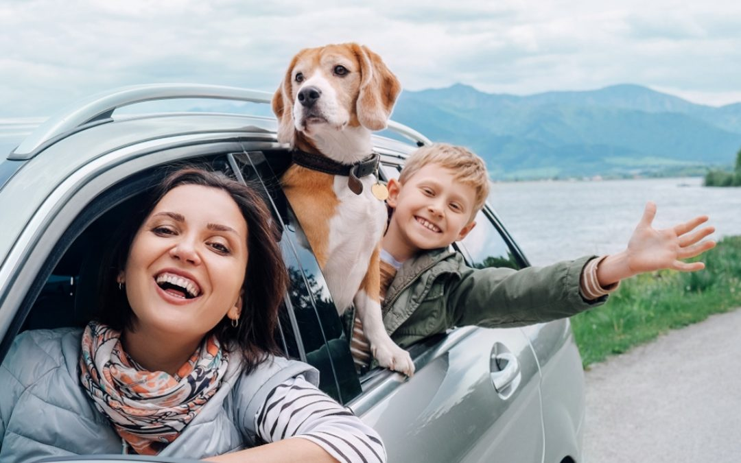 12 TIPS FOR TRAVELLING WITH YOUR PET